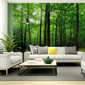 Φωτοταπετσαρίες Poster FTS 1324